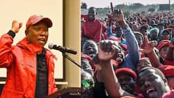 Julius Malema's Twitter account suspended following inflammatory post