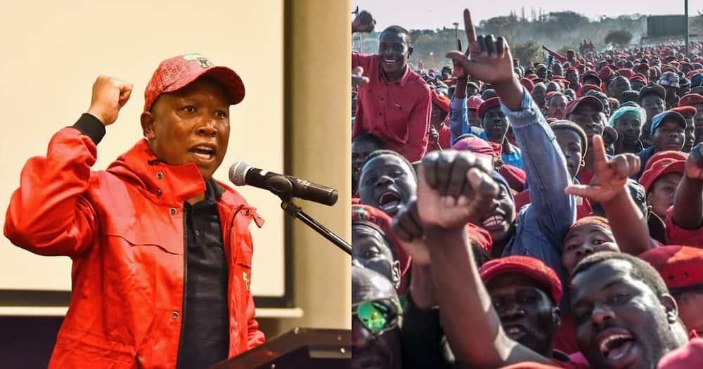 Julius Malema, Twitter, suspended, incitement to violence