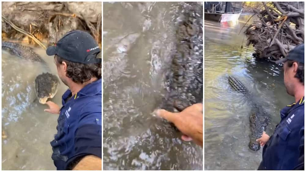 A collage showing the man as he interacted with the crocodile. Photo source: Instagram/Matt Wright