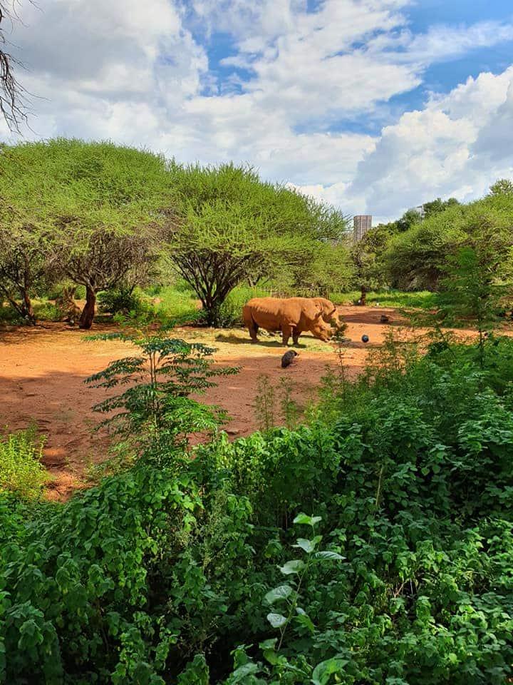 Pretoria Zoo during lockdown