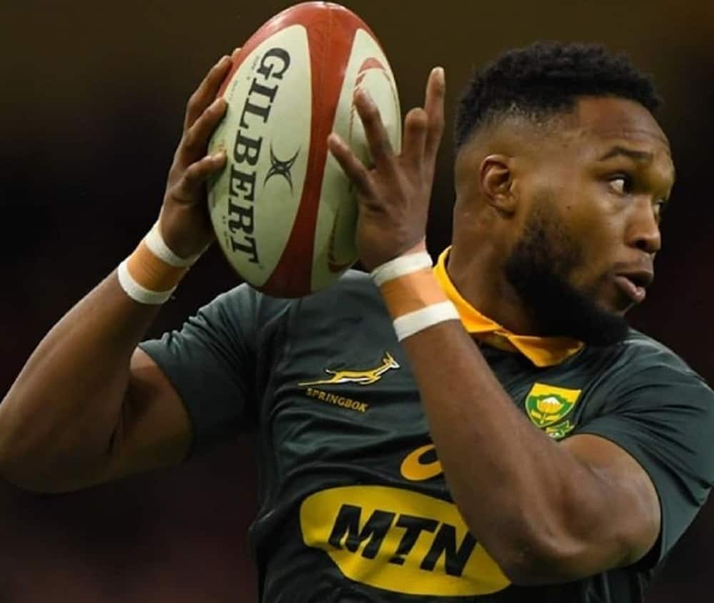 lukhanyo am south africa rugby