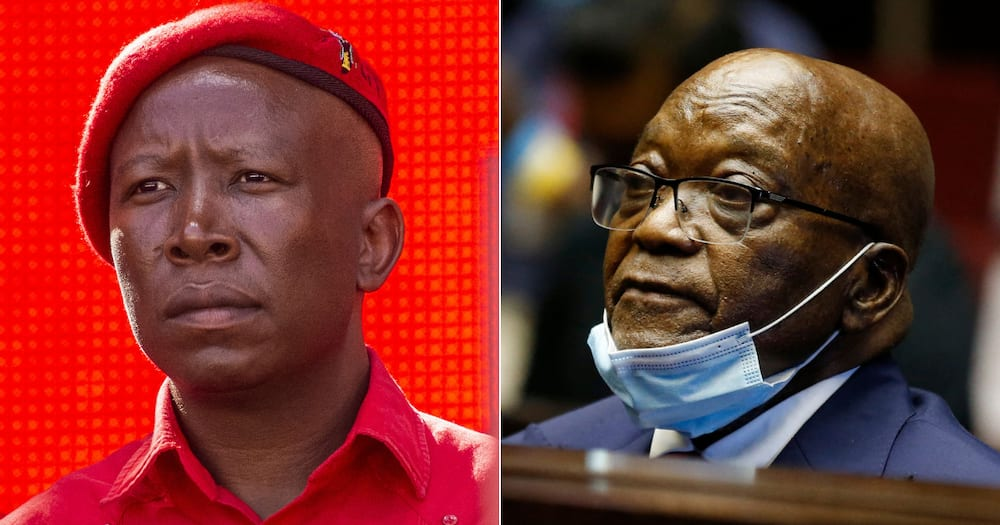 EFF Leader Julius Malema Says Seeing Zuma Going To Jail Was Painful