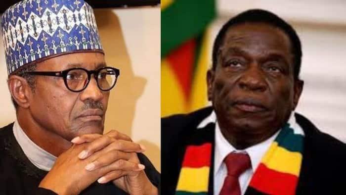 "Maimane puts Buhari and Mnangagwa in the ""same WhatsApp group"""