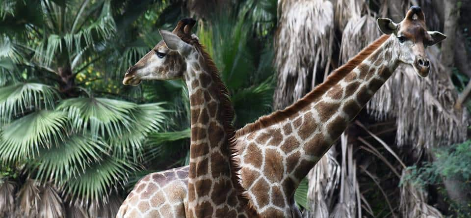 Here Are the Friendly Pretoria ZOO Entrance Fees For 2019