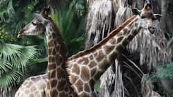 Here is all you need to know about the Pretoria Zoo - entrance fees and fun activities