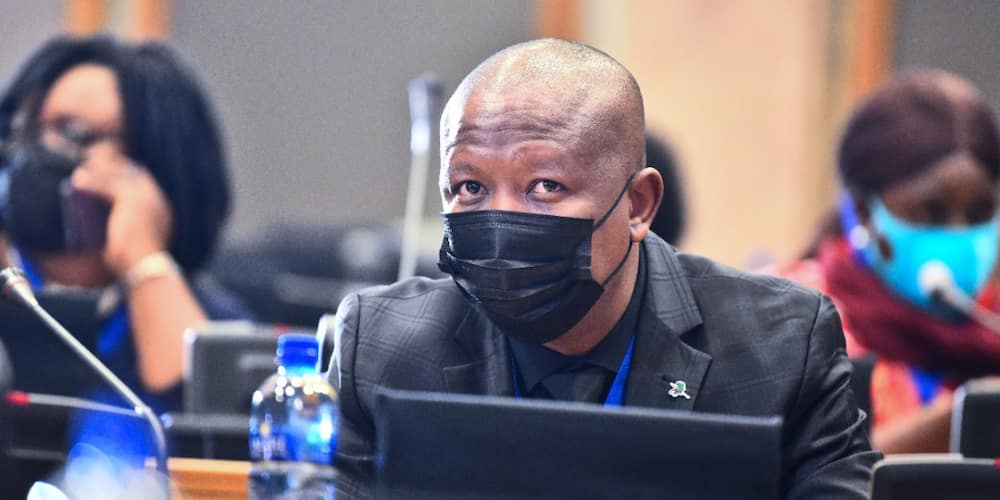 """Julius Malema Responds to Getting Shoved in Parliament, SA Says: """"I Admire Your Calmness"""""""