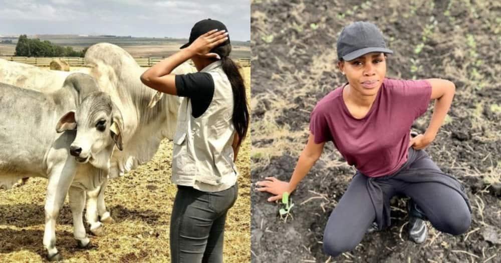 Stunning lady, 27, inspires Mzansi, farming