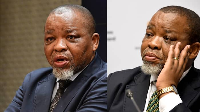 Gwede Mantashe says ANC can't employ everyone, calls unemployment a 'global crisis'