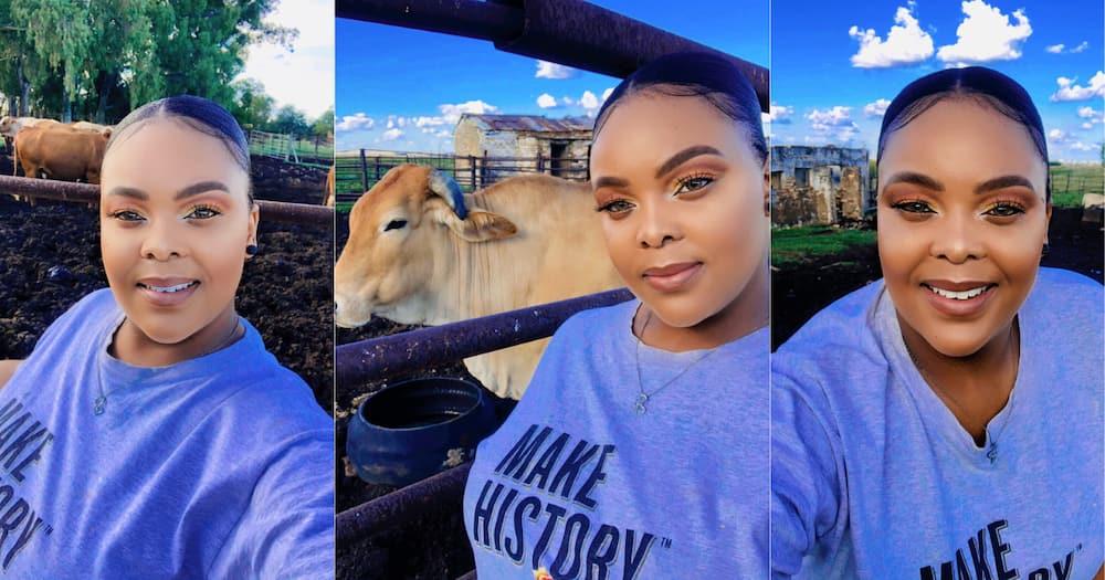 Gorgeous Female farmer', snaps, cows