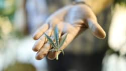 R650m cannabis deal has a South African company floating their way to the top