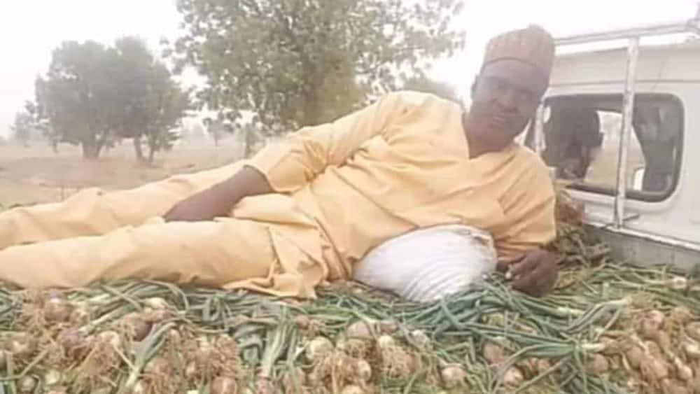 Ibrahim Umara, University, professor, onion harvest