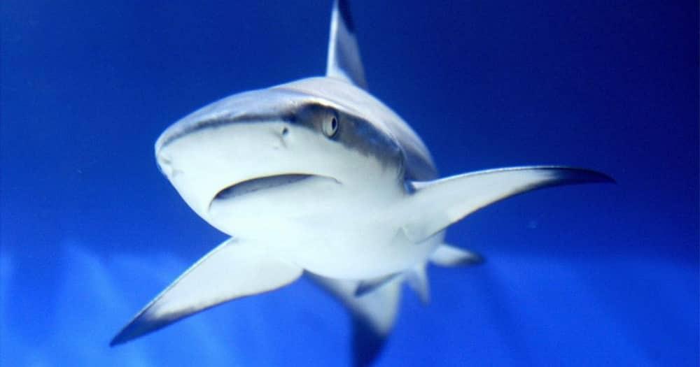 Fact Check, No, shark, not stolen, debunked