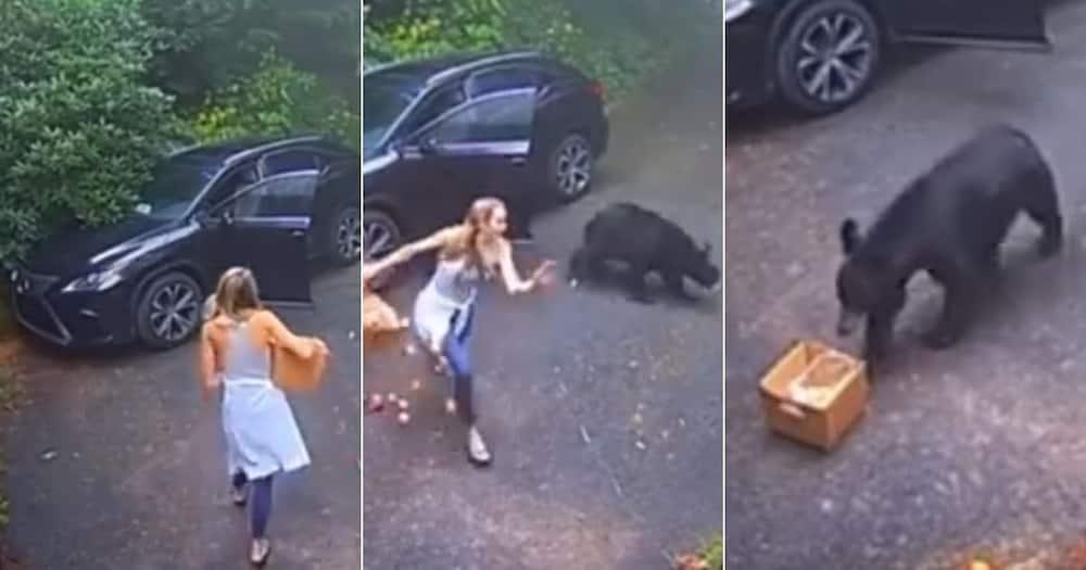 bear, car, scare lady, fruit, funny