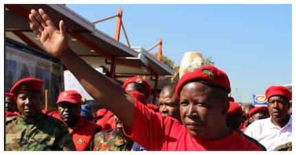 Twitter reacts after learning Mazzotti owns Malema's Joburg home