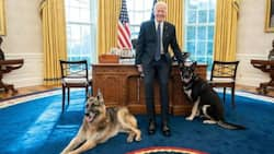 Joe Biden signs privileges for dogs to freely walk into his office