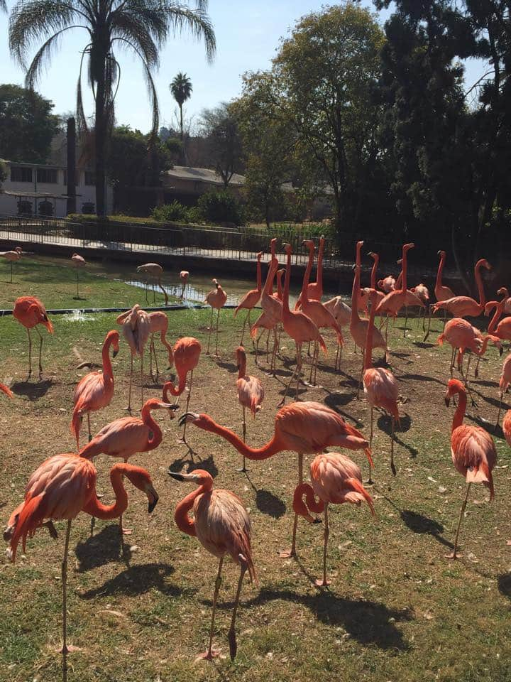 Fun activities at the Pretoria Zoo