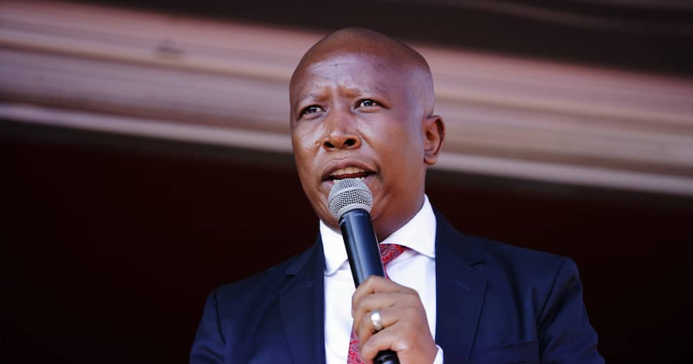 Covid-19: Malema warns government against risk of reopening schools