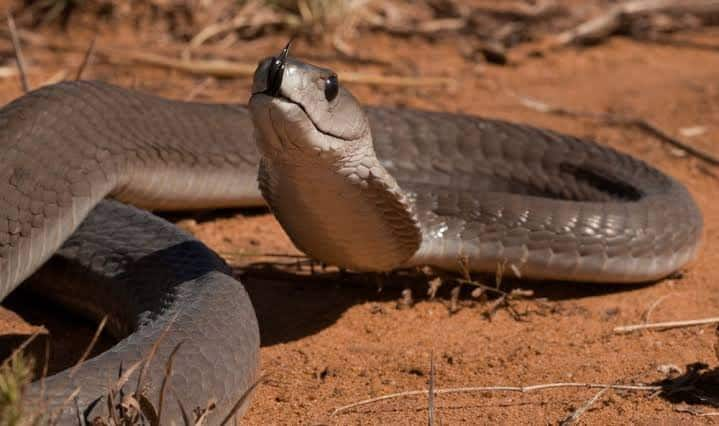 Snakes in South Africa