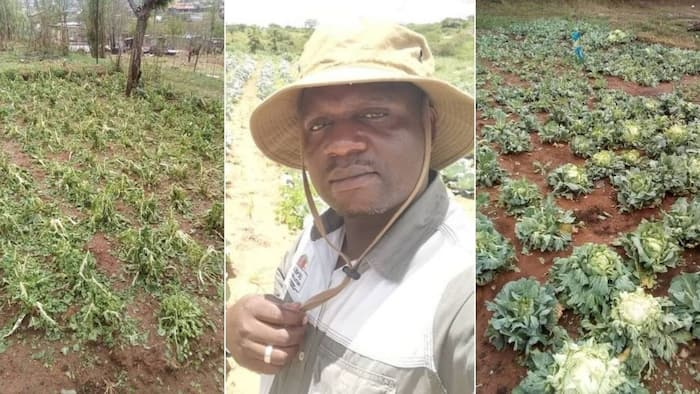 """""""Keep your head up"""": Local Farmer shares heartbreaking pictures of damaged crop, Mzansi shows support"""