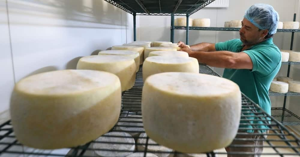 Clover Closes Biggest SA Cheese Factory in NW, Plans to Relocate to Durban