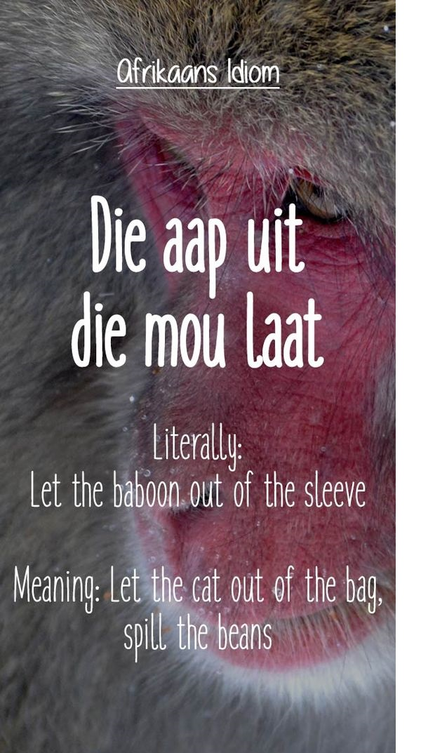 25 Best Afrikaans Idioms And Proverbs Ever With Images