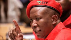Julius Malema says have as many children as you want, the EFF government will feed them