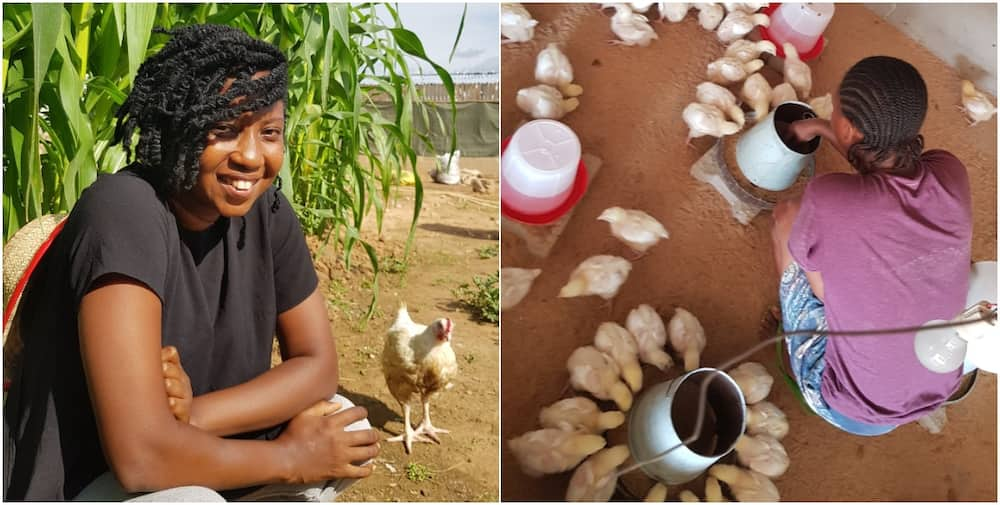 Nigerian lady builds successful poultry, shares secrets on social media