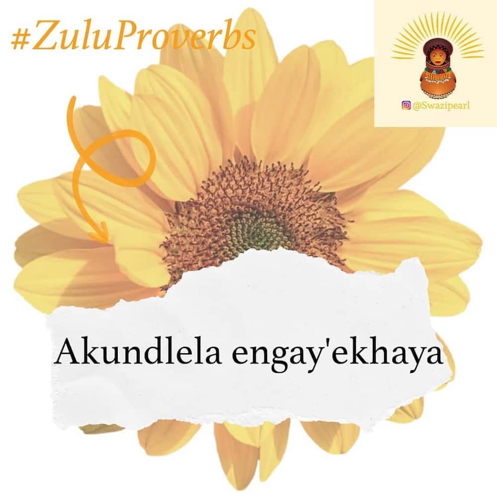 Best Zulu proverbs