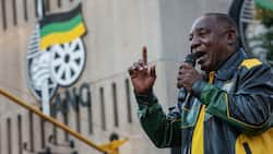 Mzansi anticipates ANC's manifesto launch, expert believes ruling party will beg for forgiveness