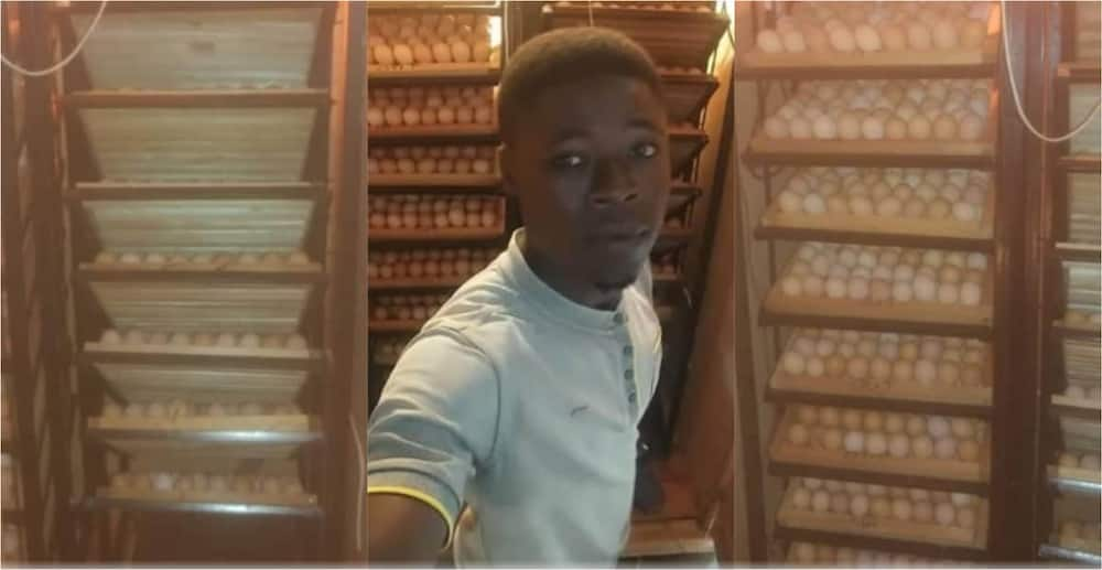 Samuel Crystal: Young Ghanaian creative builds new incubator that hatches 2000 eggs in 21 days