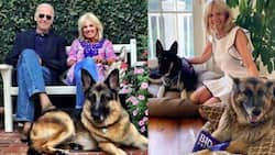 Champ and Major: Biden's Lovely Dogs Moving into the White House